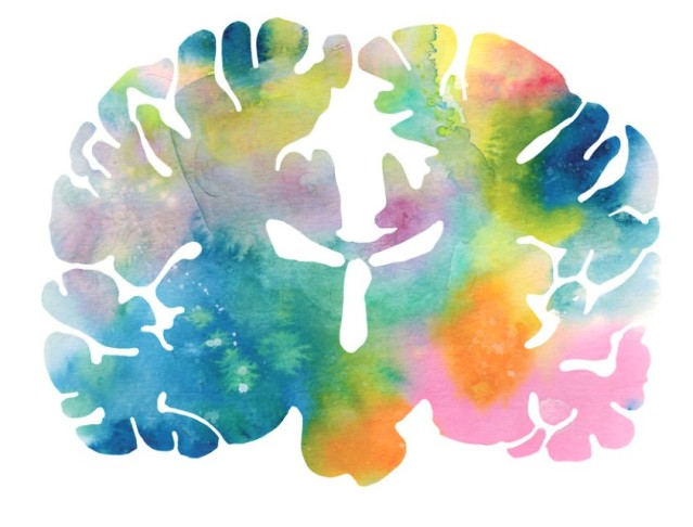 J_Sayuri_Animal_Brains_Homo_Sapien__880